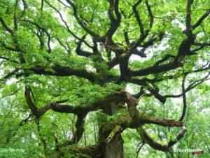 arbre guide en Brocéliande, chambre à tachyons